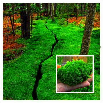 Egrow 100Pcs/Pack Moss Seeds Home DIY Bonsai Decoration Grass Seeds Potted Plants Seeds
