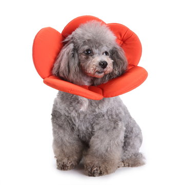 Flower Shape Dog Cat Collar Pet Elizabeth Circle Wound Healing Medical Anti-Bite Collar