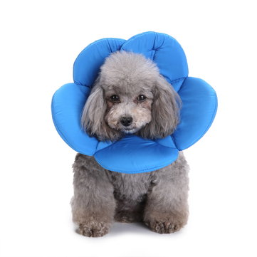 Pet Protective Hood Anti-Bite Anti-Scratch Neck Protection Pet Dog Collar