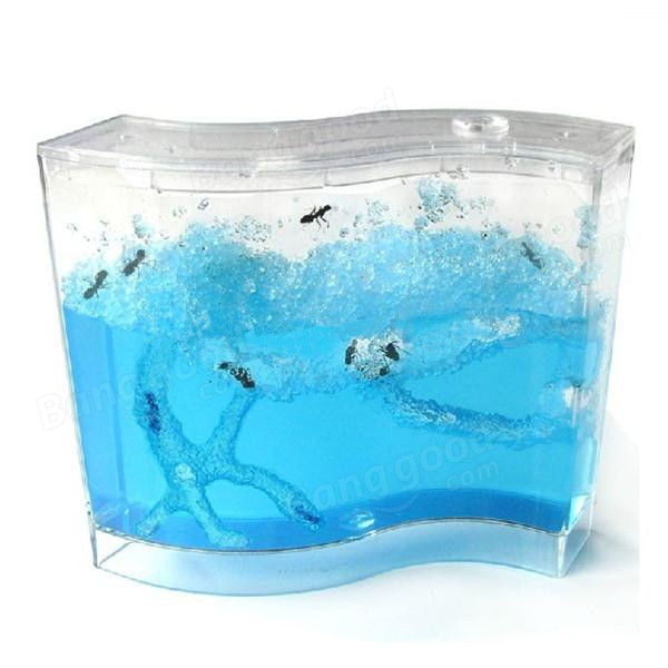 Ant Farm Ant Work Ant Palace Ant home Gel Maze Ant Fun Glue